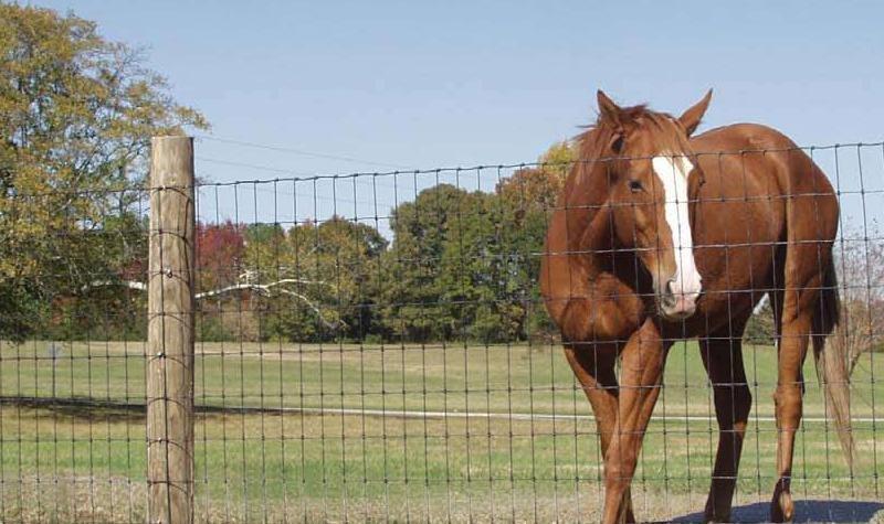 Horse-wire
